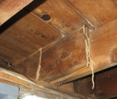 termites on joist